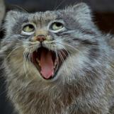 happycat.jpg